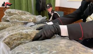 Droga dalla Spagna a Caserta, 48 chili di marijuana nascosti nei mobili da spedire