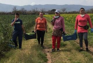 """Gli immigrati ora aiutano noi: """"Verdura a chi non può comprarla con la crisi Coronavirus"""""""