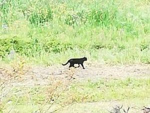 L'animale avvistato a Torrecuso (Benevento)
