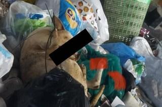 Melito, cane strangolato e ucciso gettato nell'immondizia