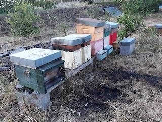 Ercolano, incendio in un'azienda agricola sul Vesuvio: morte 10mila api