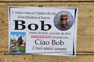 San Sebastiano al Vesuvio dice addio a Bob, il 'sindaco dei cani', investito e ucciso da un'auto