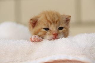 L'insopportabile pregiudizio del gatto che non sa amare