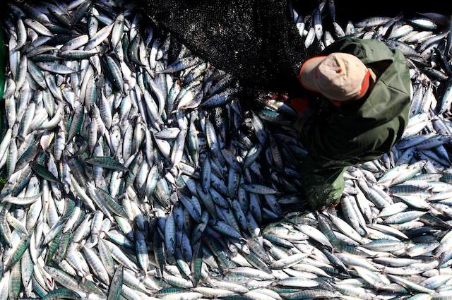 Solo il consumo consapevole può salvare i nostri mari