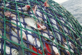 Buttiamo 10 milioni di tonnellate di pesce ogni anno e continuiamo a svuotare il mare
