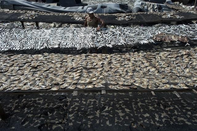 Ci sono regole precise che permettono di pescare senza distruggere la fauna marina