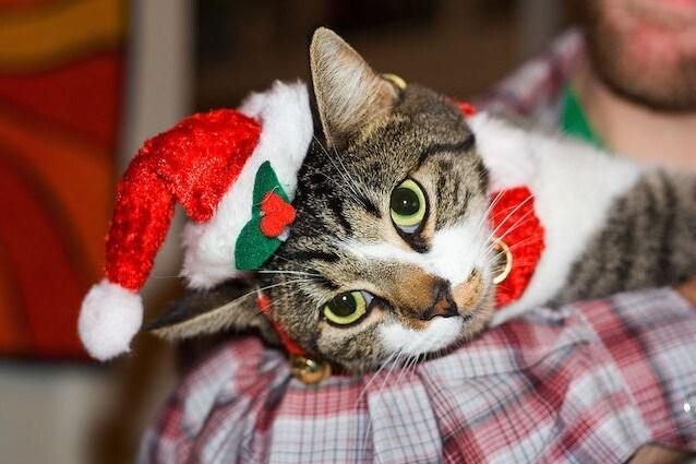 Cani e gatti come regali di Natale