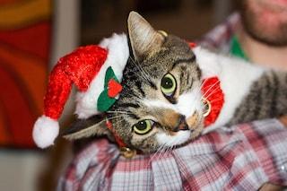 È giusto regalare un cucciolo di cane o gatto per Natale?