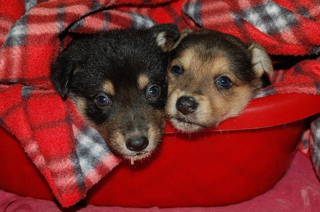 Creiamo per i nostri cani un luogo in cui possano sentirsi al sicuro a casa