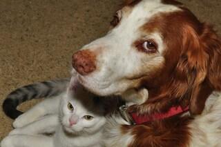 Tutto quello che c'è da sapere sulla castrazione dei cani e dei gatti