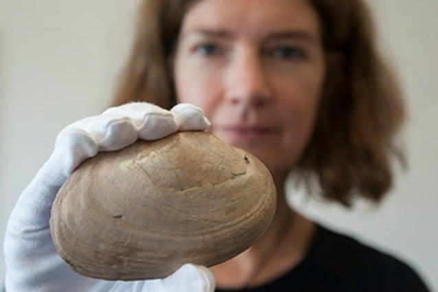 L'archeologa José Joordens con una delle conchiglie che l'Homo erectus rompeva per mangiarne il frutto. (Photo: Henk Caspers, Naturalis)