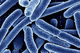 I super batteri uccidono 11.000 italiani all'anno: allarme resistenza agli antibiotici