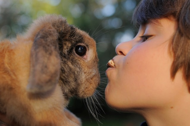 Molti bambini affetti da autismo hanno un coniglio come animali domestico