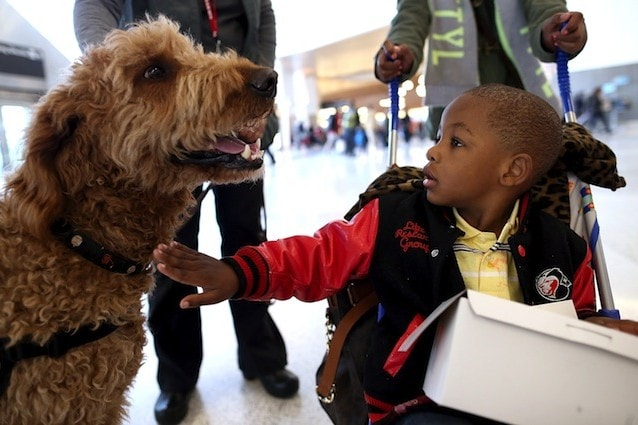Da sempre il cane è considerato il migliore amico dei bambini