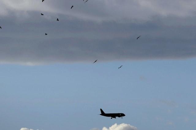 Gli uccelli si spostano solo quando sono a 30 metri di distanza