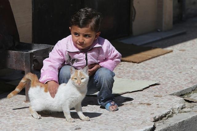 I gatti in quanto piccoli sono adatti ai bambini affetti da autismo