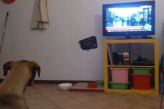Anche i cani guardano la televisione