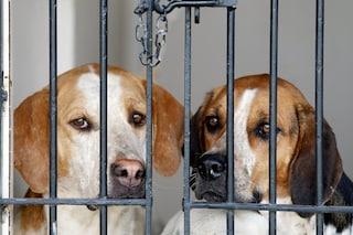 Una proposta di legge per impedire che gli animali domestici vengano pignorati