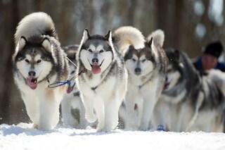 10 animali che hanno super poteri