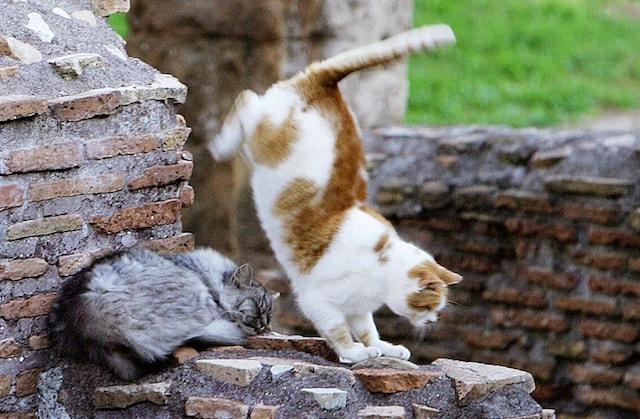 Il gatto cade sempre in piedi