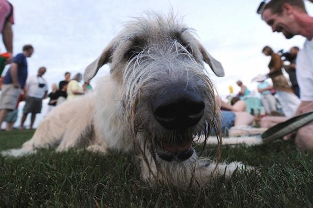 Il cane e la telepatia