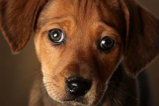 Il tuo cane ti guarda e capisci cosa vuole? Ti sta manipolando e sa farlo anche bene