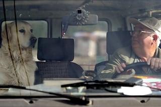 Danno morale per la morte del cane, veterinario condannato