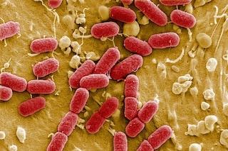 Misurare i gas intestinali per comprendere il nostro stato di salute