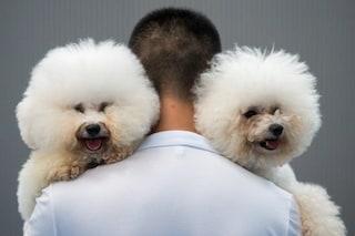 Il tuo cane fa pipì in salotto? A provocarla sarebbero i tuoi problemi affettivi