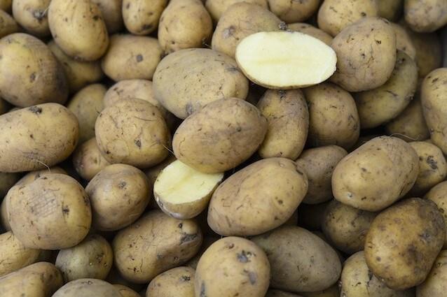 Una patata OGM tenta di entrare sul mercato europeo