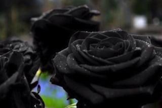 L'affascinante rosa nera di Halfeti in Turchia