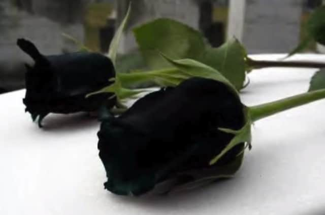 La rosa nera è in realtà color cremisi