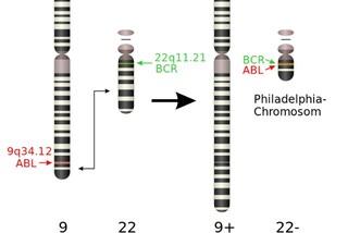 Trasformare cellule tumorali in cellule che mangiano il cancro