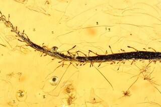 Trovato il primo fossile al mondo di una pianta carnivora