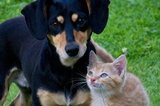 La condizione di cani e gatti nelle nostre città, il rapporto di Legambiente