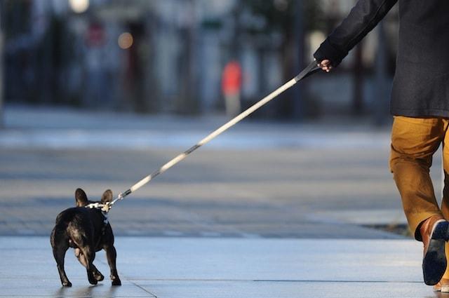 I cani tirano al guinzaglio ma glielo abbiamo insegnato noi
