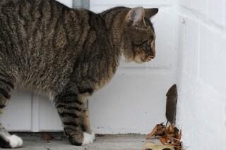 I gatti possono soffrire della sindrome di Tom & Jerry