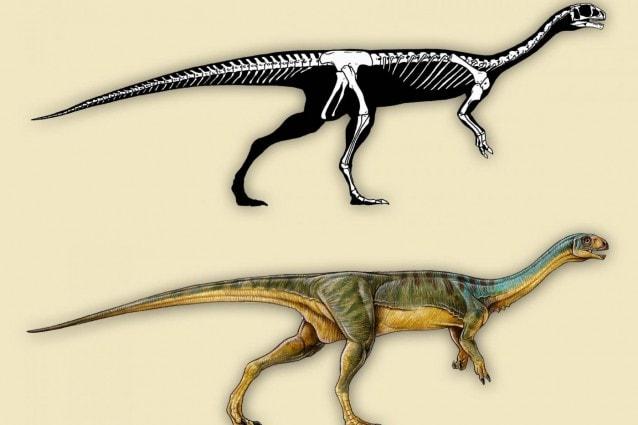 Ricostruzione artistica di Chilesaurus diegosuarezi