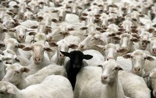 Pedoni come pecore, se indecisi si affidano a chi li precede