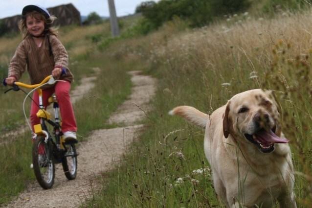 Evitare di lasciare cani e bimbi da soli