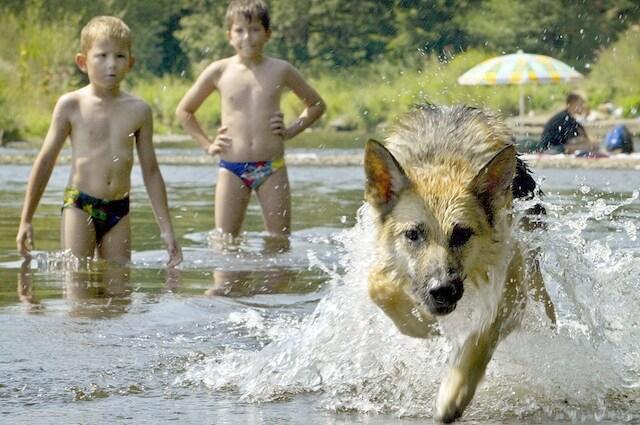 I cani e i bambini possono divertirsi molto insieme