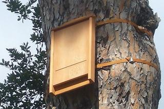 Rimedi anti zanzare: come costruire la Bat Box, il rifugio per pipistrelli