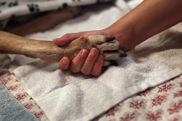 I nostri cani possono salvare la vita di altri amici a 4 zampe