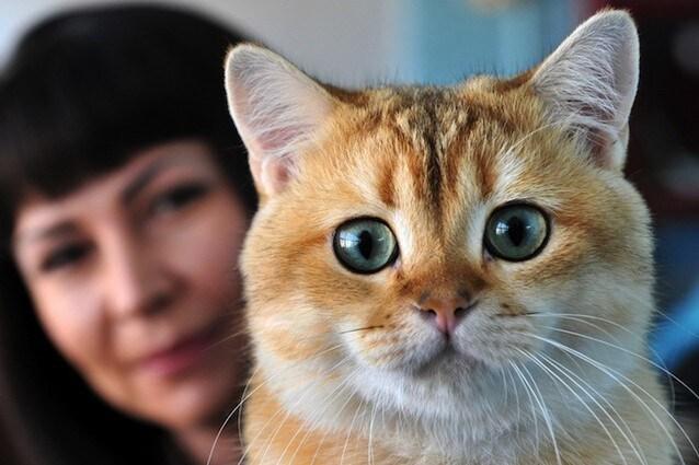 L'allergia ai gatti potrebbe provocare il glaucoma