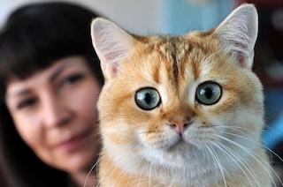 L'allergia ai gatti aumenterebbe il rischio di ammalarsi di glaucoma