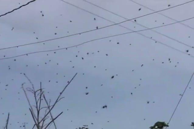 In Australia piovono ragni