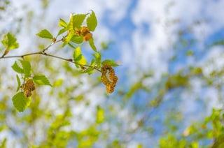 L'attività del sistema immunitario cambia con le stagioni