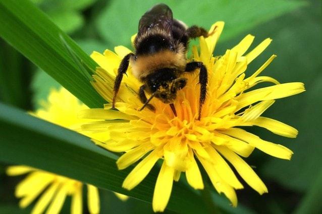 Ad Oslo creata un'autostrada per api
