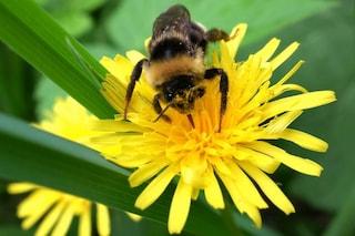 Creata ad Oslo l'autostrada per api