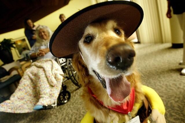 I cani anziani sono abitudinari proprio come i nostri nonni